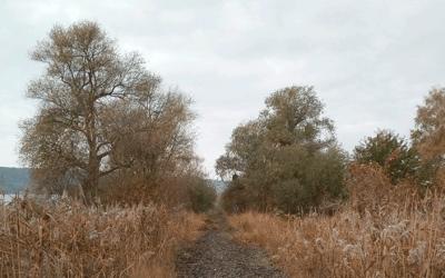 Rückbau der Gleise geht weiter!